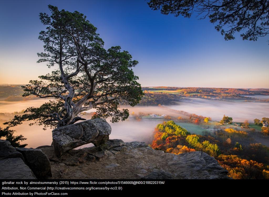 scenic shot, trees overlooking lake