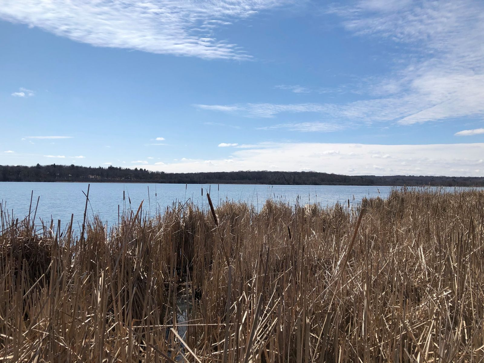 photo overlooking lake with cattails